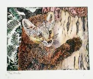 Pine Marten, copyright Carol Cooley