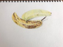 2020 Nature Artists' Guild, bananas, copyright Susan Stachovic