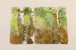 2020 Nature Artists' Guild, birch tree study, copyright Vicki Liszewski