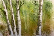 2020 Nature Artists' Guild, birch trees study, copyright Vicki Liszewski