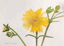 2020 Nature Artists Guild, flowers, copyright Carol Carls