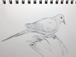2020 Nature Artists Guild, Dove, copyright Susan Stachovic