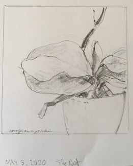 2020 Nature Artists' Guild drawing, copyright Carol Jean Rogalski