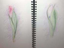 2020 Nature Artists' Guild, Tulips, copyright Susan Stachovic