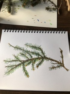 Nature Artists' Guild 2020 Spring Encounter, Pine tree branch, copyright Nancy Wu