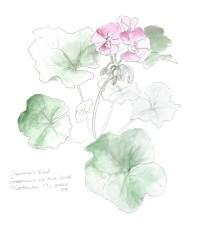 Geranium, copyright Jane Kellenberger