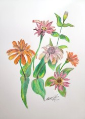 Sketch of zinnias, copyright Beata Nowak