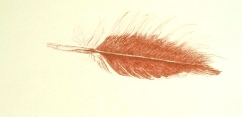Feather sketch in ink, copyright Denise Fisk