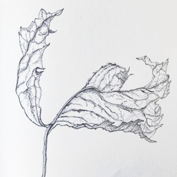Ink drawing, copyright Nancy Wu