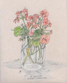 Last of Summer geraniums, ink and colored pencil, copyright Marlene Vitek