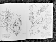 Pages from nature journal, copyright Linn Eldred