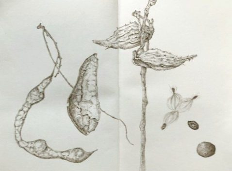 Pages from nature journal, copyright Nancy Wu