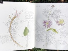 Pages from nature journal, October, copyright Linn Eldred