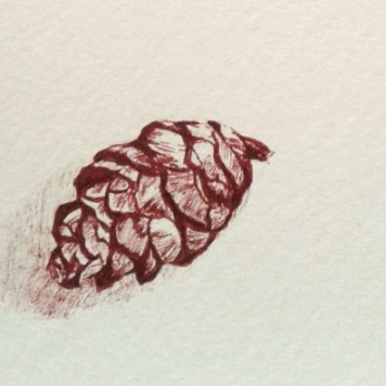 Pinecone sketch, copyright Denise Fisk
