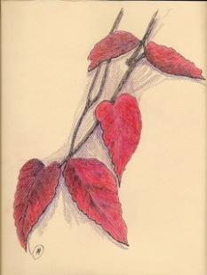 Red leaves, ink and colored pencil, copyright Marlene Vitek