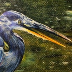 Blue Heron, colored pencil, copyright Margie Navolio