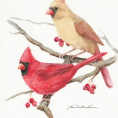 Cardinal Couple, watercolor, copyright Laurie Alvear