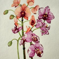 Multi-Colored Orchids, watercolor, copyright Kathi Kuchler