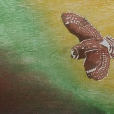 Pueo, Mokuhanga (Japanese wood block print), copyright Arlene Widrevitz