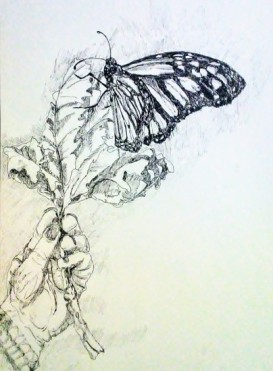 Releasing a Brand New Monarch, copyright Carol Cooley