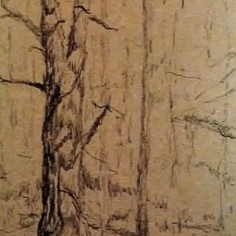 Trees in Ink on cardboard, copyright Carol Cooley