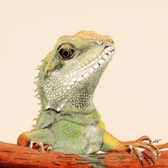 Who You?, colored pencil, copyright Alice Wych