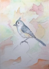 Bird drawing, copyright Susan Stachovic