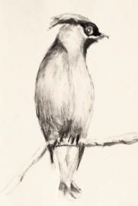 Cedar waxwing tonal study, copyright Carol Cooley