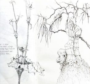 Sketchbook pages, copyright Nancy Wu