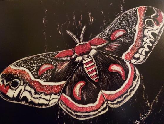 Cecropia Moth, scrachboard with ink, copyright Jill Adzia