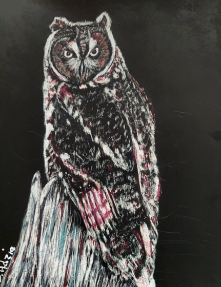 Great Horned Owl, scrachboard with ink, copyright Jill Adzia