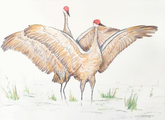 Sandhill Cranes, copyright Jill Adzia